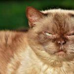 猫様の機嫌をとって「もふもふ」させて頂くには?