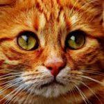 猫が喜んでモフモフさせてくれる秘技!〇〇マッサージとは?