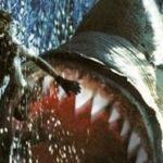 メガロドンの巨大な歯は高値で売れる?どこに行けば見つかるの?