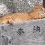 幸運は猫にあり?猫神様のおわす神社特集その2