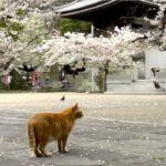 猫様はお寺が大好き?猫ゆかりの寺院を特集