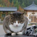 猫はパワースポットにいる!猫寺・猫神社8選