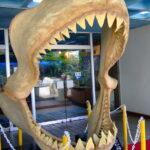 メガロドンより巨大?クジラより遥かに大きい海洋生物が生存か!